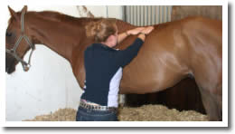 Hannah Booker - pictured administering equine massage therapy to horse.